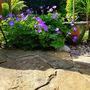 Geranium Rozanne (Geranium robertianum (Cranesbill))