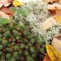 2325  moss and lichen