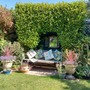 Griselinia hedge...mirror and bench..