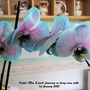 Orchid_blue_pink_flowering_on_living_room_table_1st_january_2020