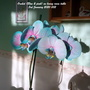 Orchid_blue_pink_on_living_room_table_3rd_january_2020_002