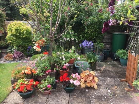 Mainly Begonias