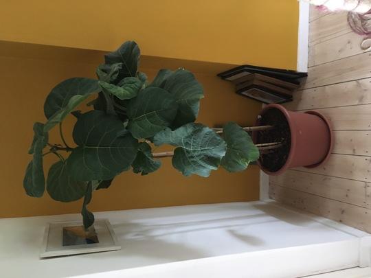 Unknown houseplant