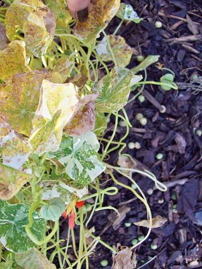 Seeds On Bark Mulch