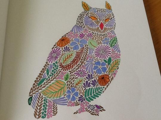 Floral Owl.