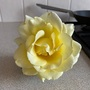 My yellow rose , it was broken so I put in vase