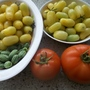 Tomatoes and cucamelon