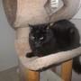 Kool Cat Keeps Cool