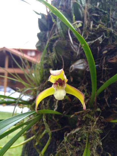 Native orchid Close