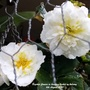 Begonia_flowers_in_hanging_basket_on_balcony_6th_august_2020_001