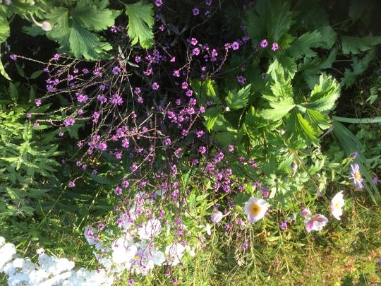 Front garden flower bed.