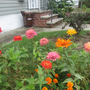 Colorful Front Border