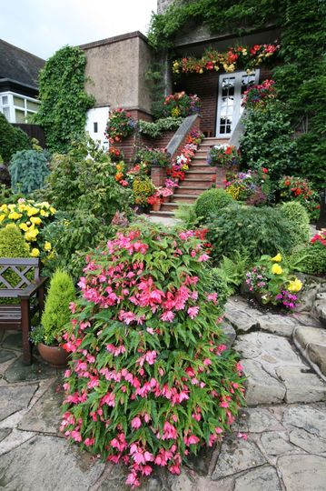 steps and tiered begonias