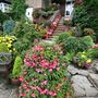 Steps_and_tiered_begonias
