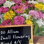 Allium bulbs just bought for balcony railings 19th September 2020 (Allium)
