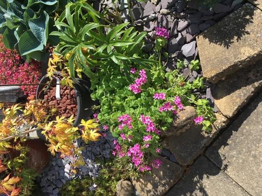 Back garden border.