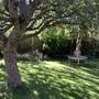 Dappled shade under my apple tree