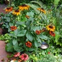 Cheerful plants by the entrance in late September