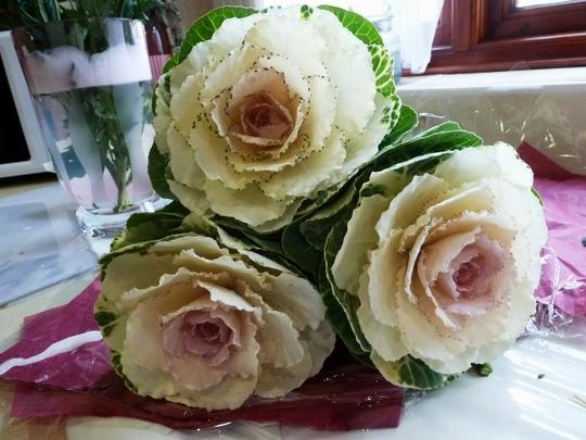 Brassica ornamental kale