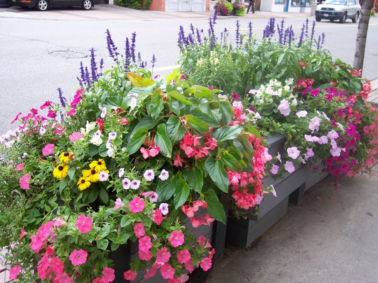 Flower box outside the store