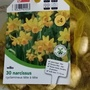 Narcissi_bought_for_troughs_on_balcony_railings_25th_september_2020