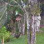Visitor - Aburria jacutinga