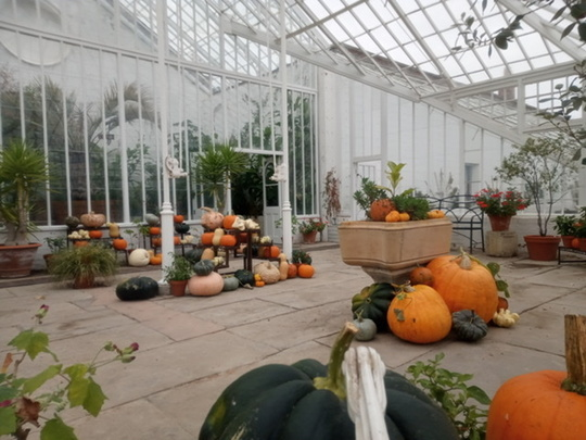 The glasshouse in Climber Park