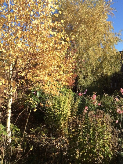 Autumn golds.