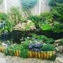 Summer pond..