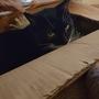 Eve - my little Christmas helper!