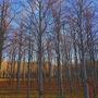 Winter woodland.