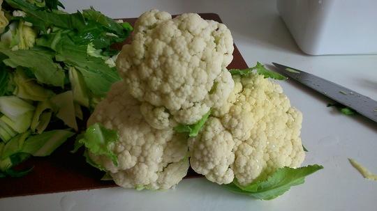 Cauliflower  (Brassica oleracea (Botrytis) (Cauliflower))