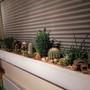 new updated long planter on windowsill