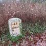 Symphoricarpos albus & Milestone (Symphoricarpos albus (Common Snowberry))