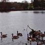 The Geese are back and paired up, being very loud...as well.