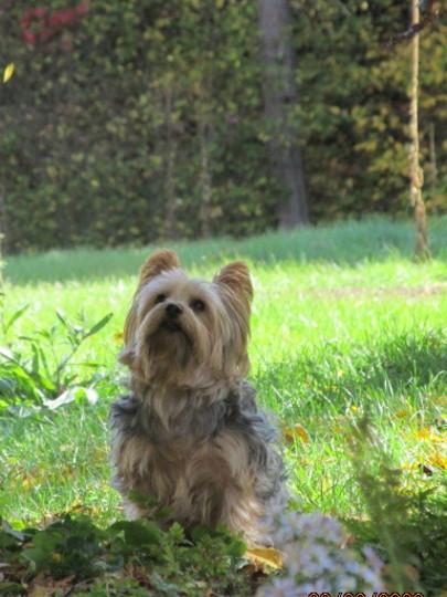 flash back to summer... Ryott watching a squirrel..