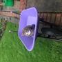 Cat approved wheelbarrow!