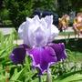 June_2008_061.jpg