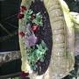 Heuchera & winter pansies