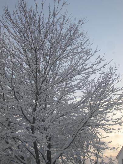 A proper winter