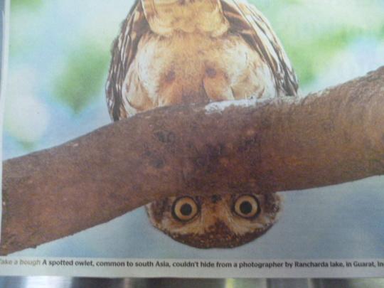 Seen in today's newspaper!