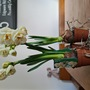 Nice little narcissus  (Narcissus)