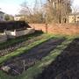 On the veg plot today