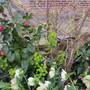 Camellia cutting no 3 (Weigela)