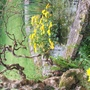 A corner of our pond under the twisted hazel.