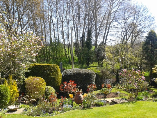 For Kate....managed to find photo of our cloud pruned shrubs 5 years ago.