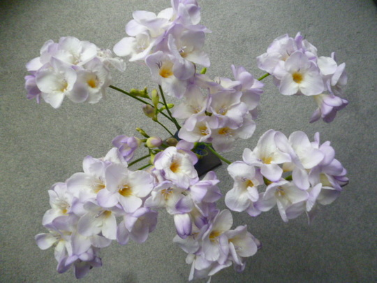 Glorious Freesias from a kind friend