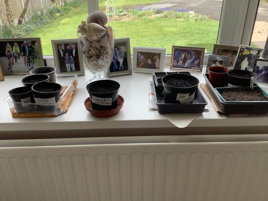 Ungerminated seedlings- week 2!