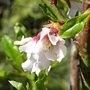 pretty flower on young almond tree