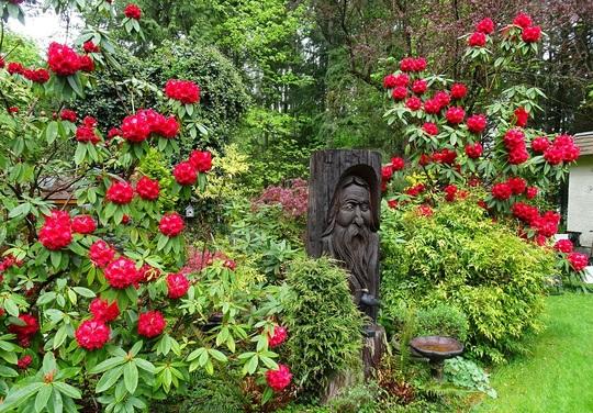Rhododendron Taurus with Woodspirit